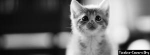 Cute Kitten Facebook Timeline Cover