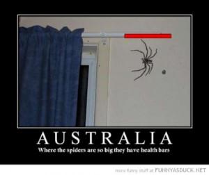 World 39 s Biggest Spider