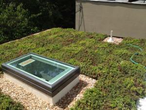 Capitol Hills, Dc Roof, Green Roof, Washington Dc, Cubiertas Vegetales ...