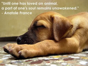 puppy quotes - teddybear64 Photo