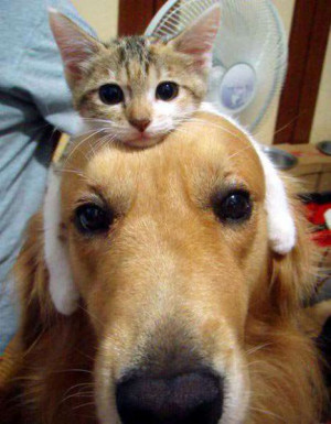 On Teh Cute you'll find the best cute animal pictures, cute puppy ...