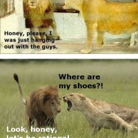 Lioness and Lion Funny Meme