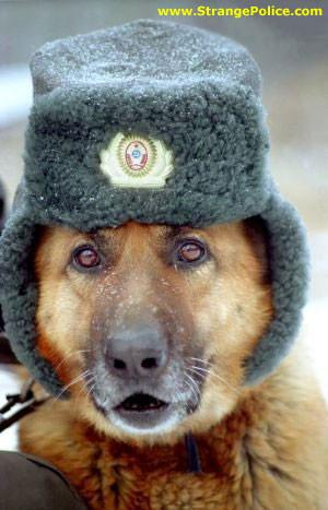 GERMAN SHEPHERD POLICE DOG - POLICE HAT WITH EAR MUFFS!