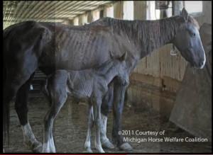 depressed in an old hog barn in Michigan.