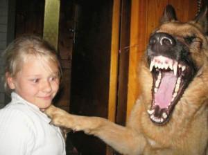 面白画像。猫。犬。シュール。