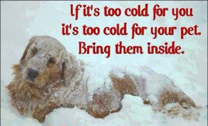 Freezing Cold Weather Quotes Winter care for your dog