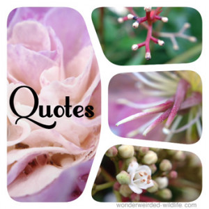 with Quotes on Nature, Our Collection of Motivational Picture Quotes ...