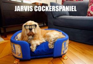 Jarvis Cocker Spaniel