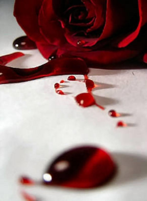 Bleeding Rose Photograph