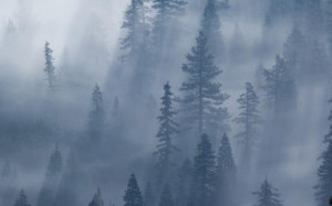 free foggy weather wallpaper application is a super live wallpaper ...