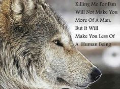 animal right remember this wolf animal cruelty animal quotes beauty ...