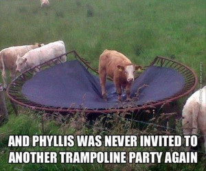 funny pics cow at a trampoline party