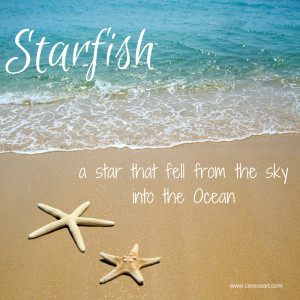 Beach Saying on CereusArt: Starfish - A Star that fell from the sky ...
