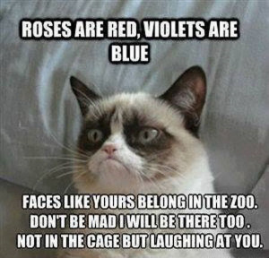 ... Roses are red violets are blue in Roses are red violets are blue funny