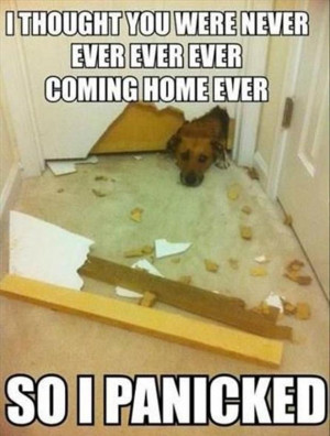 funny dogs (4)