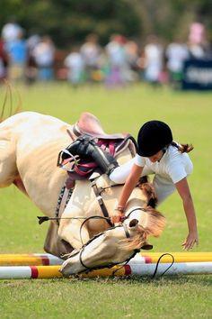 hunter jumper horse equine photo image jump rider equestrian show ...