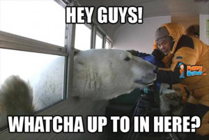 Animal Memes – Polar bear hello
