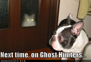 funny-dog-pictures-ghost-cat.jpg#ghost%20lol%20494x335