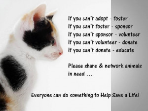 Found on singaporecommunitycats.blogspot.com