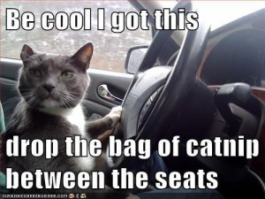 Be cool, I got this. Drop the bag of catnip between the seats.