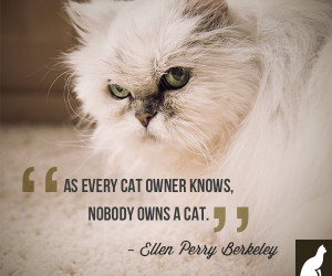 Cats With Funny Quotes To Make You Smile