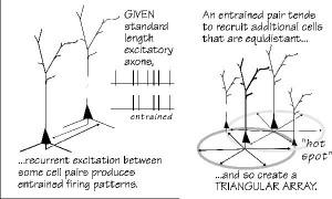 Pyramidal Neurons Pyramidal neurons,