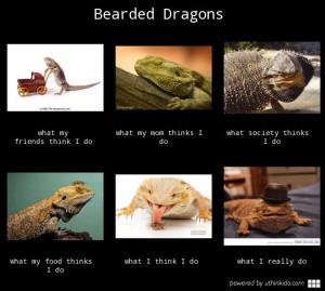 Bearded Dragon Meme