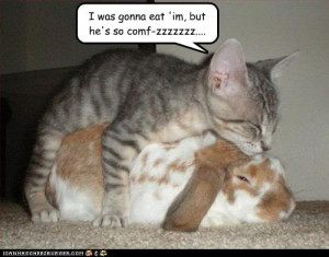 funny animals captions picture funny animals captions picture funny ...