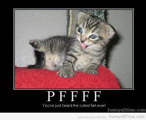 ... Entry: You have one new cat Next Entry: FUNNY QUOTES ABOUT REGRET