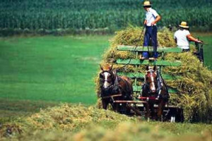 The Lessons of Amish Agriculture