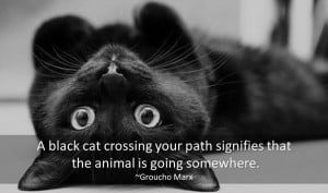 ... Cat Quotes. Here you will find famous quotes and quotations about cats