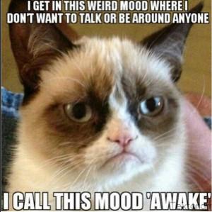 13 New Grumpy Cat Memes