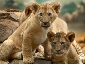 Tierbabys: Die möchte man stehlen