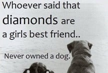 Quotes & Sayings / by 4 Luv of Dog Rescue