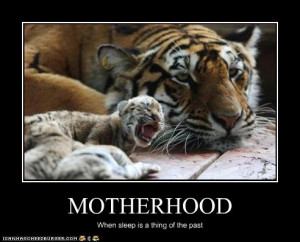 funny-pictures-mom-tiger-does-not-sleep