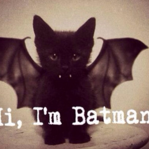 ... cute #kitten #cat #sweet #black #wings #funny #quotes #pic #like #bat