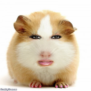 Latest Funny Pictures Hamster Wallpapers