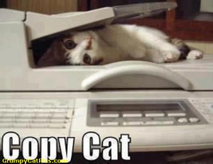 ... .com/pics/16/Copy-Kitten-Kitty—Trying-Hard-Copy-Cat-Quotes.jpg