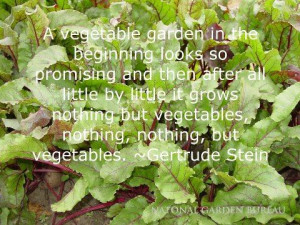 few thoughts about vegetables!