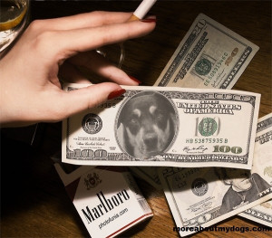 Loyal Dog is worth more than Money