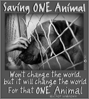 Quotes About Abandoned Animals Quotesgram