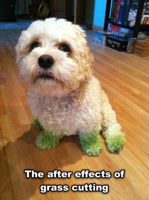 grass cutting effects funny picture