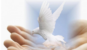 Dove of Peace Wallpaper rest in peace quotes
