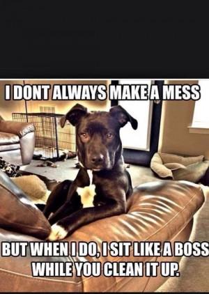 Like a Boss Funnies