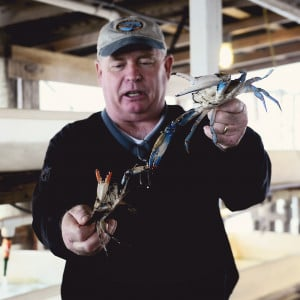 Sifting Through Life: Crabs and Cambridge, MD.