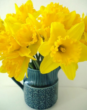 Daffodils via Colorfull at www.Facebook.com/colorfullss