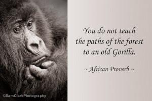 WILDLIFE PHOTOGRAPHY INSPIRATIONAL Quote, Wildlife Photo, African ...