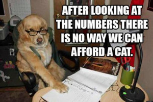 Funny dogs with words