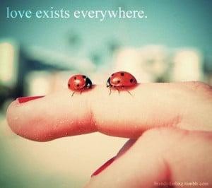 love bugs :)
