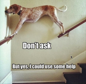 Funny dog | Now that's talent! lol